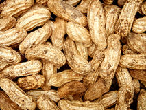 Peanuts In Shell. After Harvest royalty free stock photo