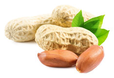 Peanuts in shell isolated on the white background Royalty Free Stock Images