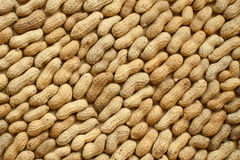 Peanuts in the shell Stock Images