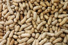 Peanuts In Shells. Bangkok, Thailand Royalty Free Stock Photo