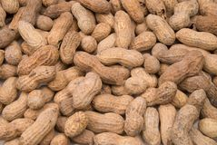 Peanuts in shells Stock Images