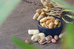 Peanuts in shells Royalty Free Stock Images