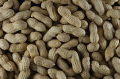 Peanuts in shells raw Stock Images
