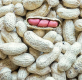 Peanuts side lighting to emphasize texture open peanuts. Royalty Free Stock Photo