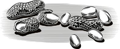 Peanuts, some without shell. Peanuts, some without shell leaning against a table royalty free illustration