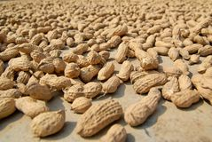 Peanuts sundried Royalty Free Stock Photography