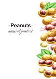 Peanuts template. Peanutsl template.  Hand-drawn watercolor illustration Stock Photography