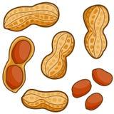 Peanuts stock illustration