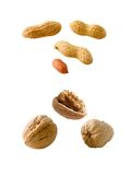 Peanuts and Walnuts. Isolated on white Stock Photography