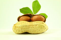 Peanuts whole and peeled with leaves closeup Royalty Free Stock Images