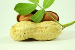 Peanuts whole and peeled with leaves closeup Stock Image