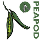 Peapod Stock Photography