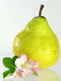 pear Obraz Royalty Free