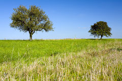 Pear and apple trees. On a field, by Beckingen, Saarland / Germany Royalty Free Stock Images