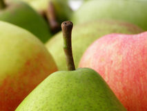 Pear and apples stock photo