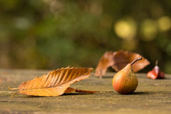 Pear in autumn Royalty Free Stock Photos