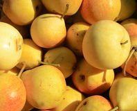 Pear background. Royalty Free Stock Photography