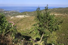 Pear on background of the Aegean coast. Royalty Free Stock Images
