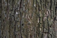 Pear bark. Bark of an old pear tree Royalty Free Stock Photo