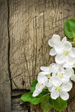 Pear blossoms over wood background Royalty Free Stock Image