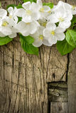 Pear blossoms over wood background Royalty Free Stock Photo