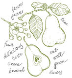 Pear collection Royalty Free Stock Photo