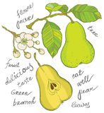 Pear collection Royalty Free Stock Images