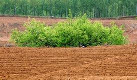The pear in farmland Stock Photo