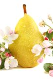 Pear and flowers Stock Image