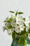 Pear flowers macro Royalty Free Stock Image