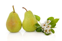 Pear Fruit and Flower Blossom. Pears and flower blossom leaf sprig isolated over white background. Rosemarie sempre variety Stock Image