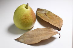 Pear fruit and leaves Royalty Free Stock Image