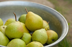 Pear fruits in bowl Stock Images