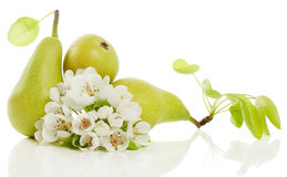 Pears  and  blossom Stock Images