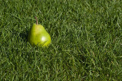 Pear in the grass. Green pear in the grass Stock Image