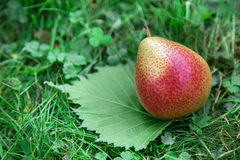 Pear on green leaf. In the grass royalty free stock image