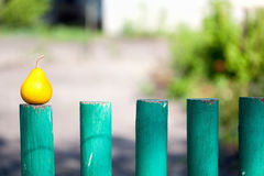 Pear on a green wooden fence Stock Images