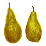 Pear hand drawn painting watercolor illustration on white background, food ingredient, organic natural vegetarian exotic fruit for Stock Photos