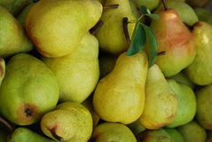 Pear harvest Royalty Free Stock Photography