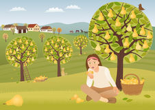 Pear harvest. Taking a snack in the middle of a pear harvest Royalty Free Stock Photography
