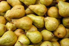 Pear harvest season Stock Images
