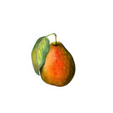 Pear illustration Royalty Free Stock Photo