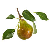 Pear isolated on white background Stock Image
