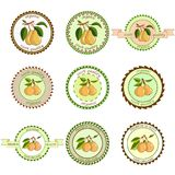Pear labels. Fruits labels collection. Colorfull variant.Fresh vegetables vector concept.