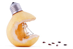 Pear lamp bulb and seeds Stock Image