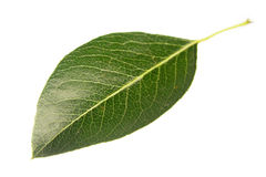 Pear leaf Stock Photo