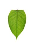 Pear leaf Stock Image