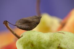 Pear with leaflet one the twig Royalty Free Stock Image