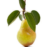 Pear with leaves Stock Photos