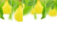 Pear mix Stock Photography